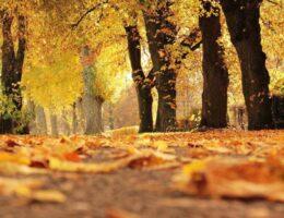 Odbiór liści w sezonie jesiennym 2020