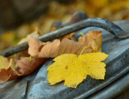 Odbiór liści z terenów nieruchomości zamieszkałych